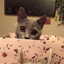 美人はネコに癒される? ビューティ界のチャーミング猫大集合!