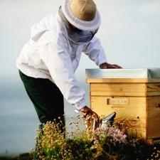 コスメブランドがミツバチ保護に取り組む理由。人にも環境にも優しいミツバチコスメ