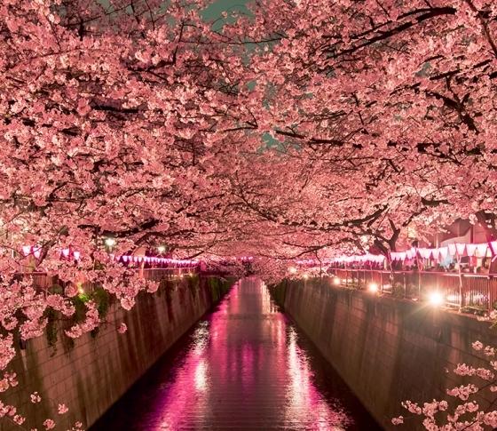 桜よりも私がキレイ!夜のお花見デートで美人に見えるメイク