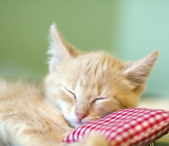 VOCEが見つけました!睡眠環境をよくする枕、マットレス、家電……!!!