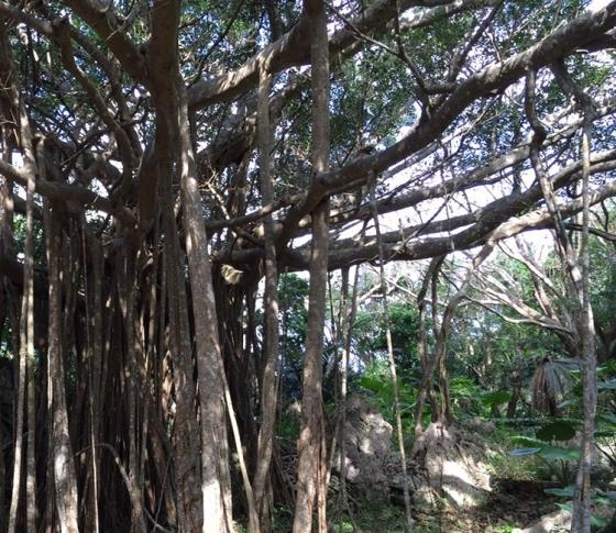太古のエネルギーを得られる沖縄のパワースポット