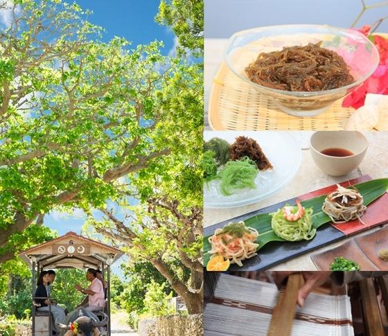 竹富島の文化と心に触れる。星のや竹富島で過ごす「もずくキレイ滞在」/DAY2