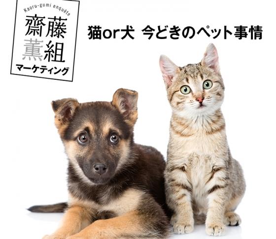 齋藤薫さんの猫ブーム考!ひとり暮らしの男が飼っているのはビミョウ?