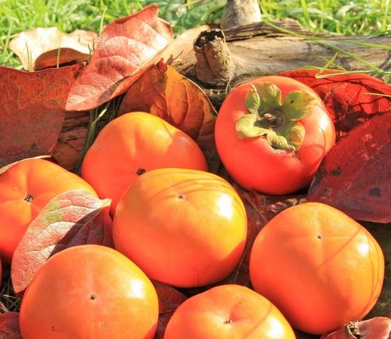 柿で肌のくすみを一掃!抗酸化パワーたっぷりの柿レシピ3