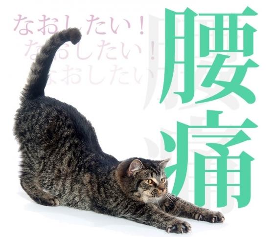 【腰痛対策教えます】腰痛は「朝の30秒正座」で治るんです!