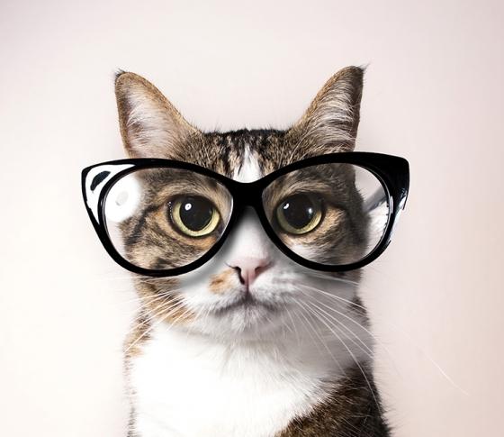 メガネに映えるメイクって?