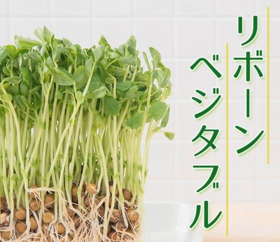 タダで始められる&土いらず! リボベジ(再生野菜)の魅力