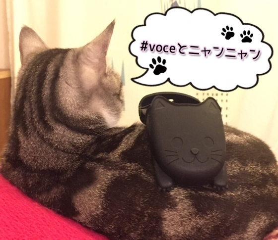 【猫好き集まれ♡】黒猫キャンペーン始動!【#voceとニャンニャン でプレゼント当たります】
