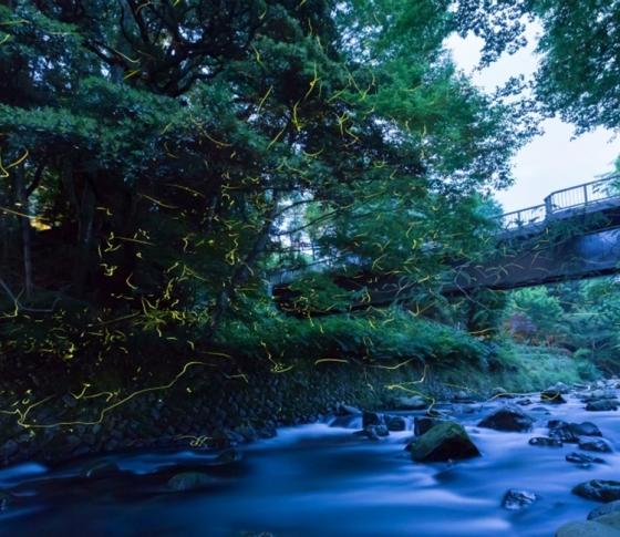 東府や Resort & Spa-Izu 滞在記3 蛍と星空に感動!  私たちが旅にでる理由がここに。