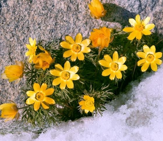 早咲きの女は、人生を4回生きよう
