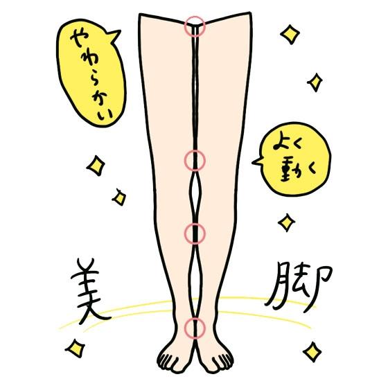 関節のやわらかい脚……細もも美脚