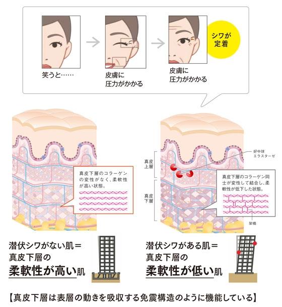 """新発見 """"潜伏シワ""""の原因は 肌の真皮下層の柔軟性低下にあった!"""