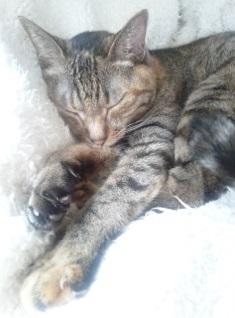 キキ,ネコ,ネコ,安倍佐和子