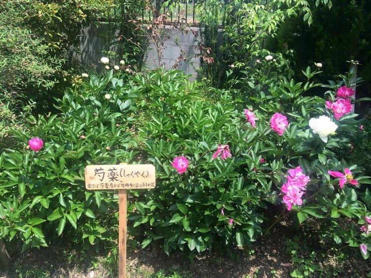 法華寺,奈良フェスティバル,からふろ