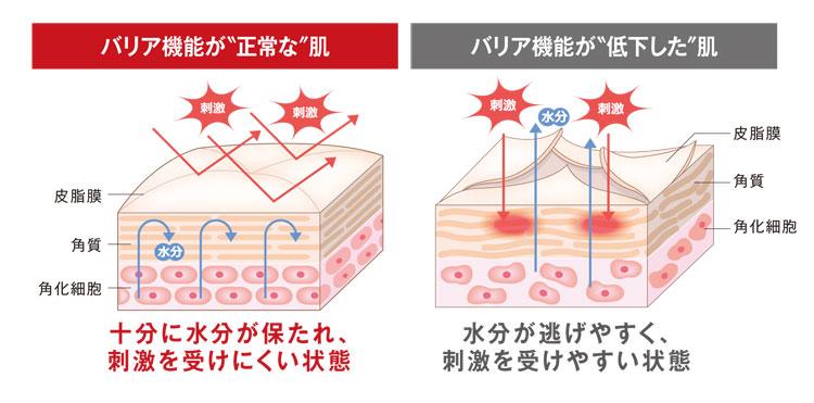 アラサー,スキンケア,バリア機能,乾燥,保湿,セラミド,細胞間脂質,ヒアルロン酸,皮脂膜,角質,角化細胞