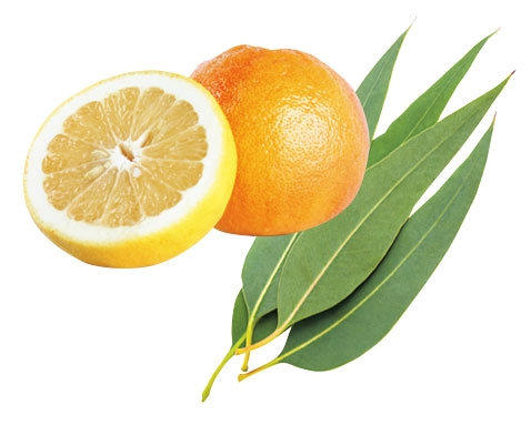 スイートオレンジ精油とユーカリ精油の香り