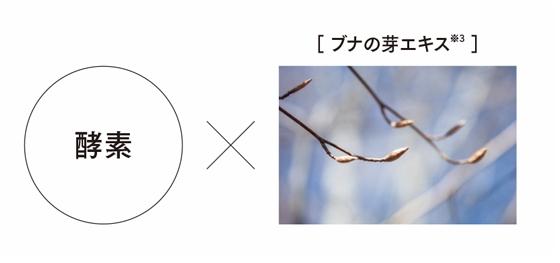 酵素×ブナの芽エキス※3