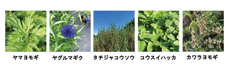 フローラドリップ5種の植物成分