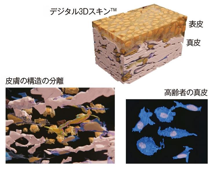 資生堂開発の「デジタル3Dスキン™」技術でビジュアル化した皮膚の構造